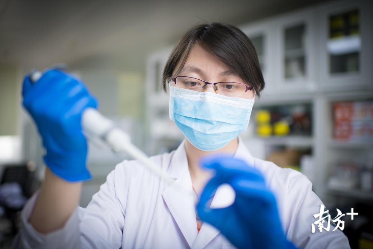 团队科研人员闫森正在提取基因组DNA。