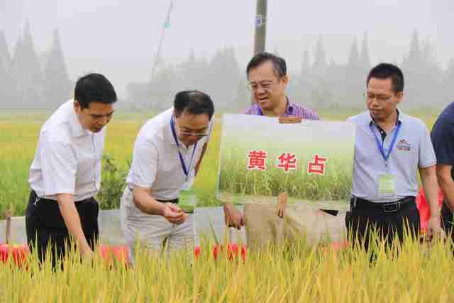 广东省农科院水稻所优质育种成绩广为业界称道。