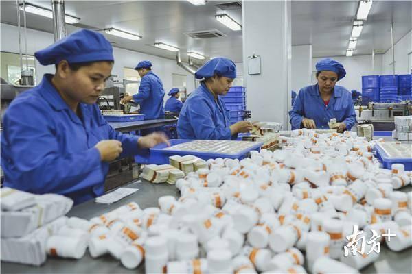 罗浮山国药的生产车间,员工有序地包装药品。