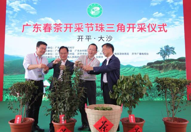 珠三角茶产业基地举办开采春茶仪式