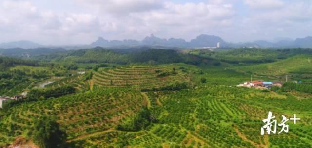 仁化县贡柑园。