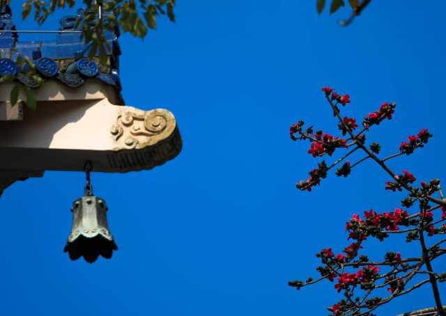 木棉花和暖春的蓝天格外相配。