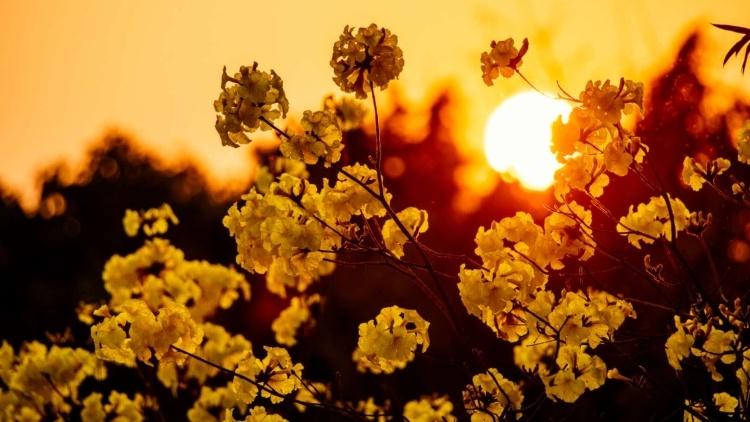 图集|春到南沙,百花齐放