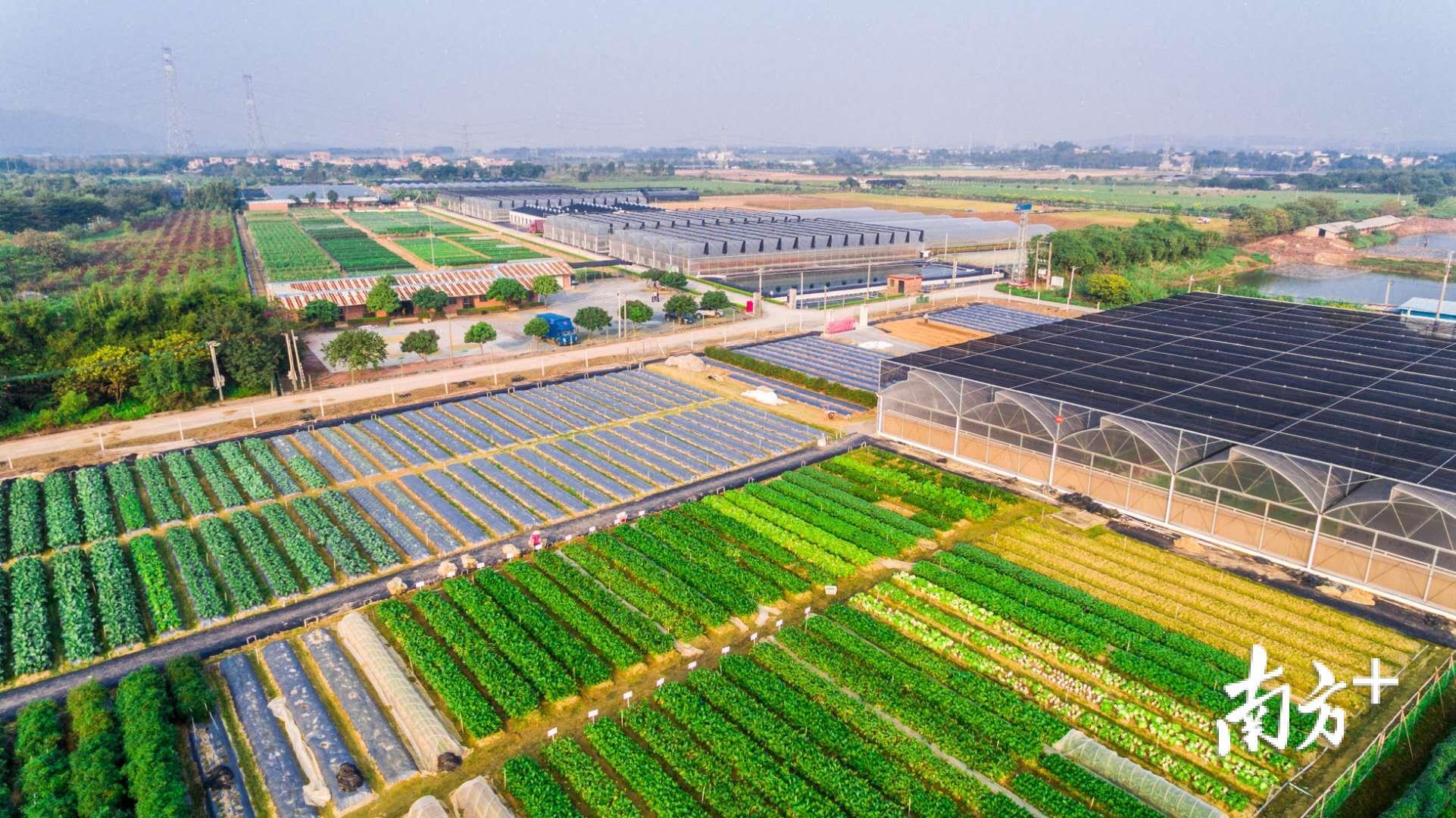 作为广东省菜篮子基地,三水2.3万亩农田春耕复耕正忙。资料图片