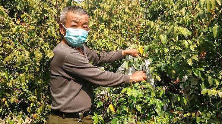 吴国纯在自家的杨桃园里。