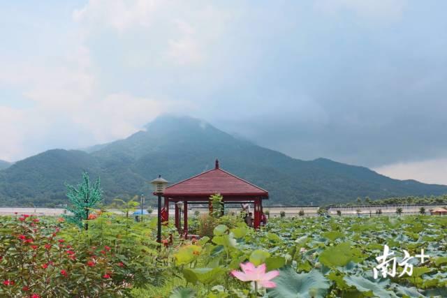 陆河将打造美丽大花园,实现绿色新崛起。 陈欣欣 摄