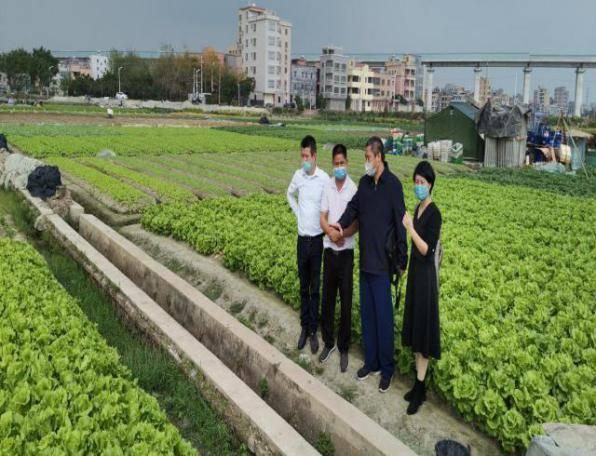 徐汉虹团队在白云区钟落潭镇生产基地调研草地贪夜蛾入侵蔬菜风险