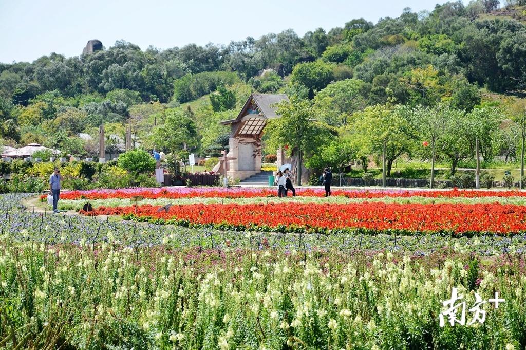 旅游市场重启后,晴好的天气吸引越来越多游客到部分已开放的景区放松身心。