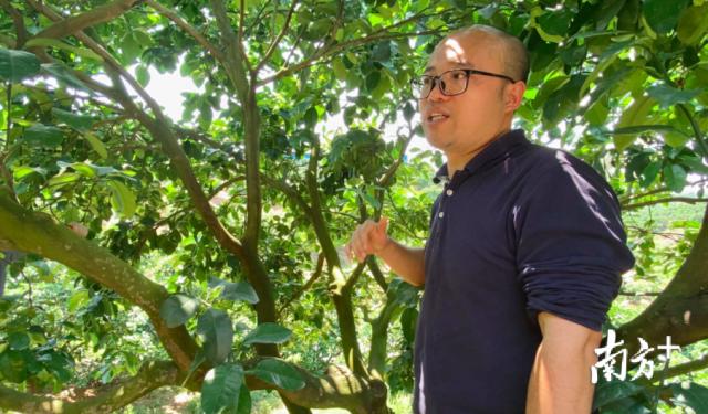 广东省农科院果树研究所副研究员姜波