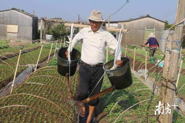 2月23日,汕头澄海蔬菜产业园,备战春耕的农户喜上眉梢。