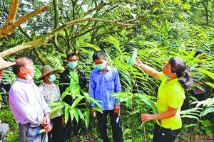 农艺师向群众宣传虫害防治知识。 余振昌 摄