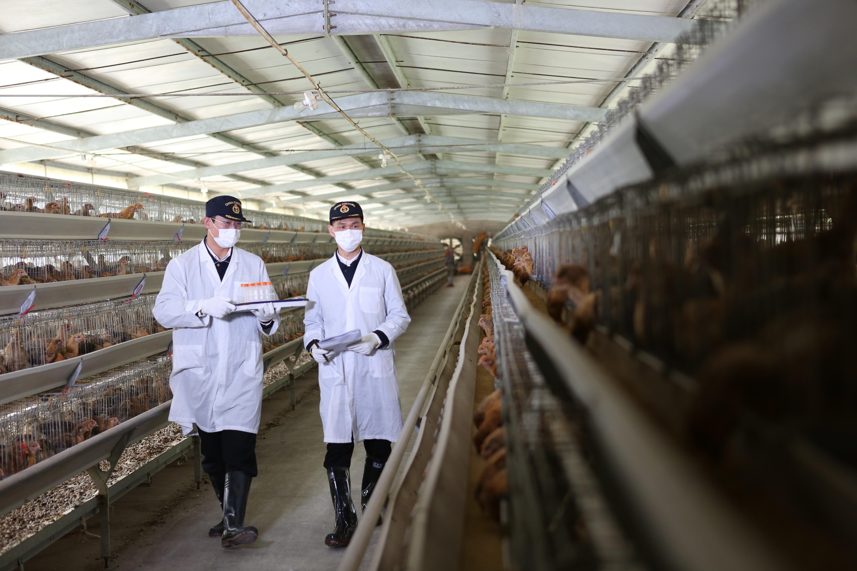 海关关员在供港澳家禽养殖场监管 温阳蕾 摄
