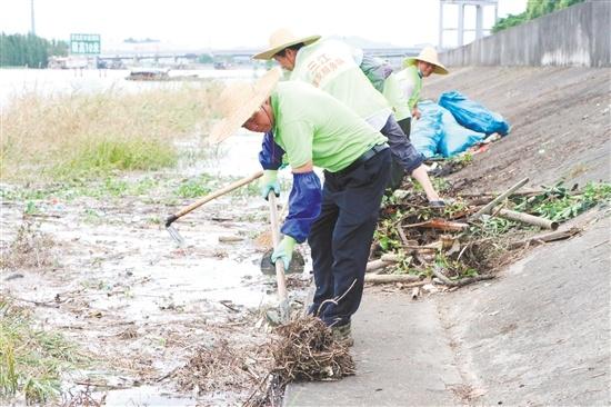 三江镇战友护河队在虎坑水道河岸边清理杂物。
