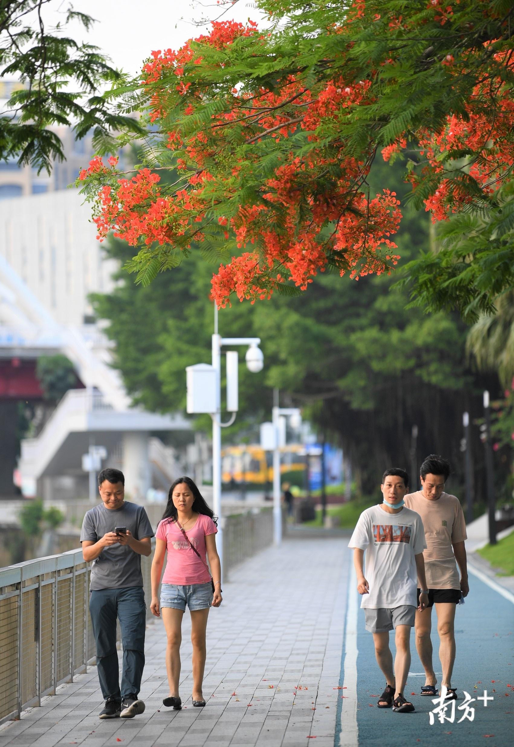 花下散步的人们。杨兴乐摄