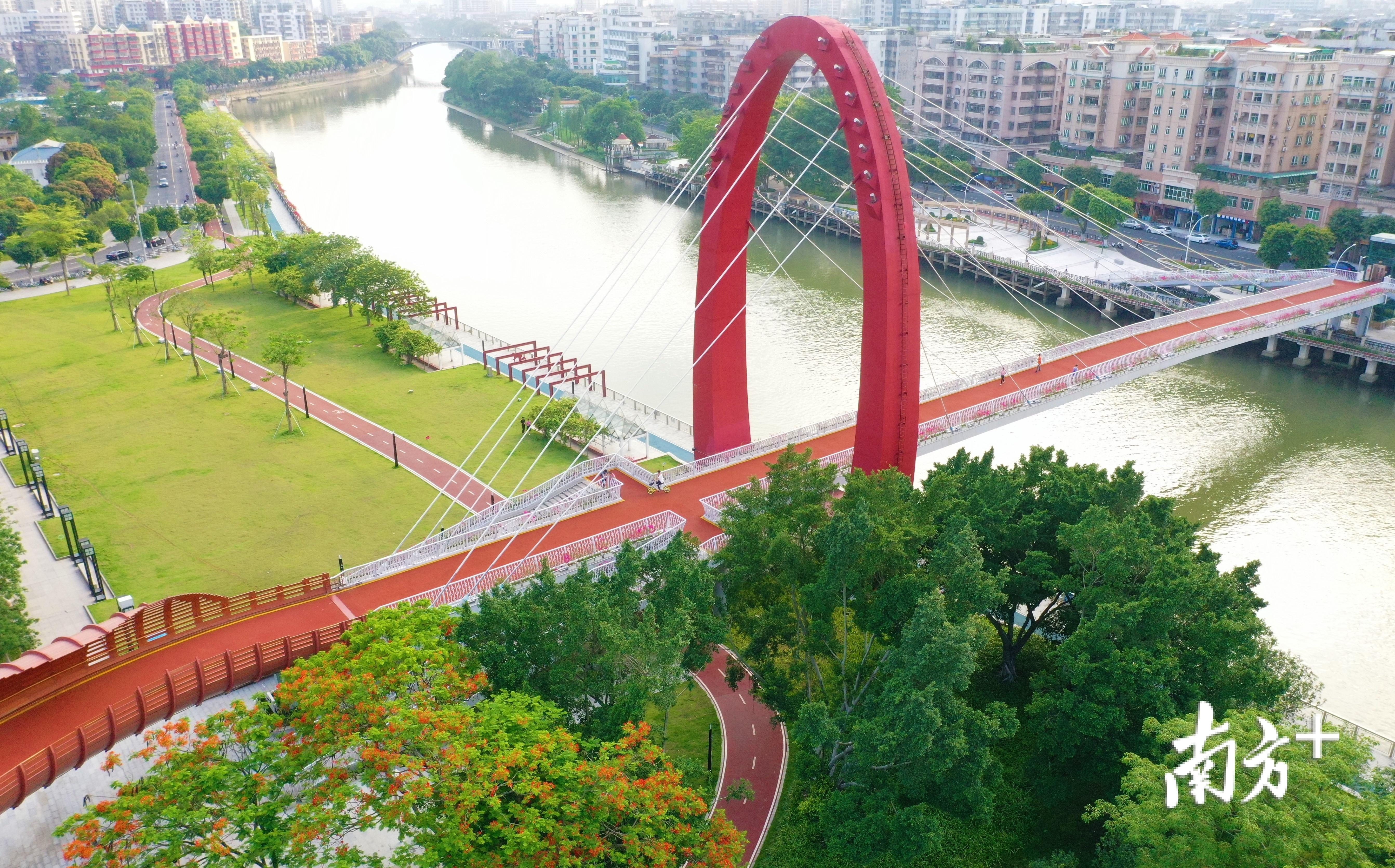 美丽的蓬江河畔,金凤花迎着盛夏绽放。杨兴乐摄