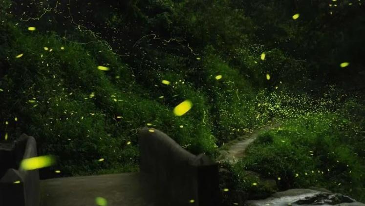 """如梦似幻!现实版""""萤火虫""""仙境,就藏在新兴!"""