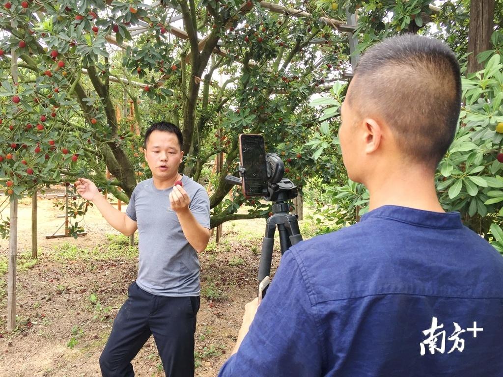 陈燕鹏向网友介绍金灶杨梅品质。