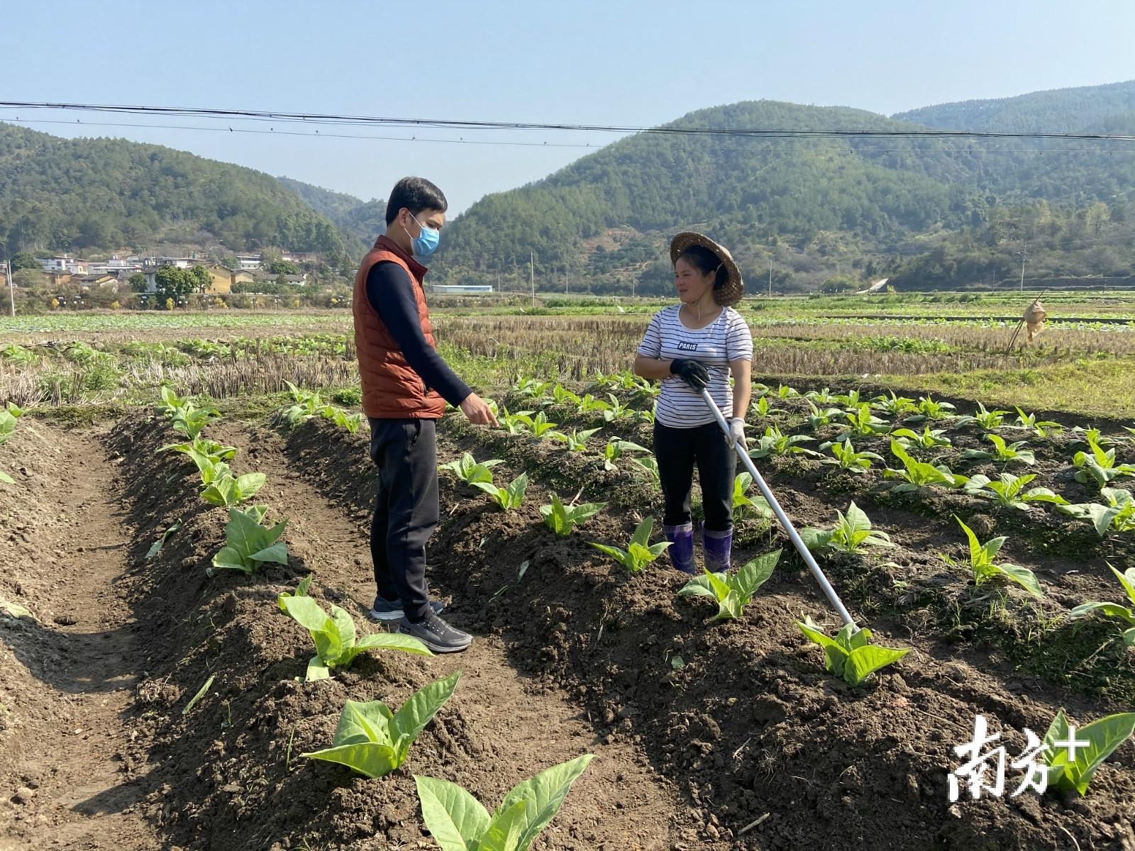今年疫情期间,巫小锦到田间指导贫困户科学春耕备耕,确保不误农时。受访者供图