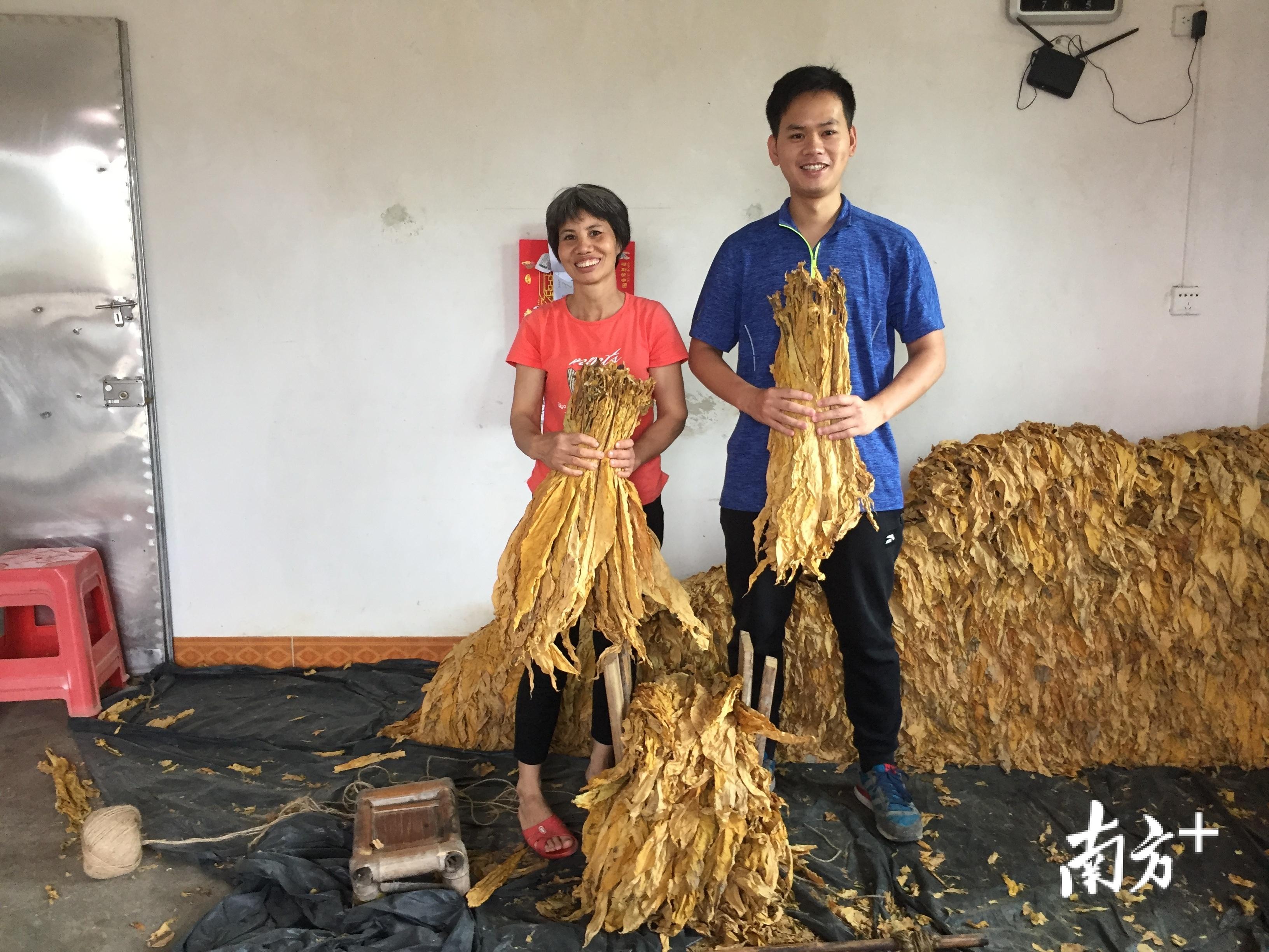 2019年,贫困户何利玲在扶贫工作队帮助下种植烟叶,喜获丰收。图为巫小锦(右)与何利玲(左)。受访者供图