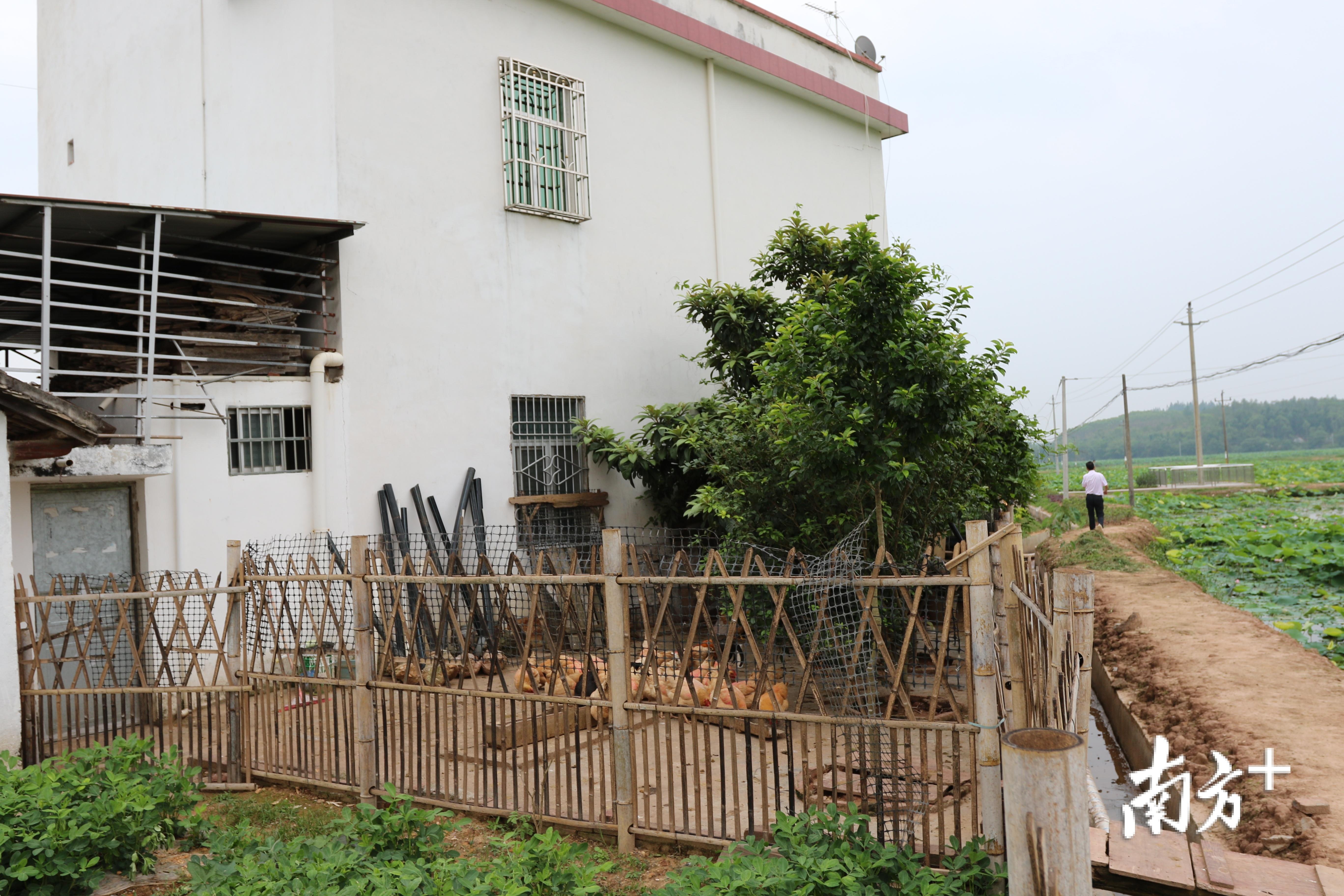石源村家禽实行圈养。