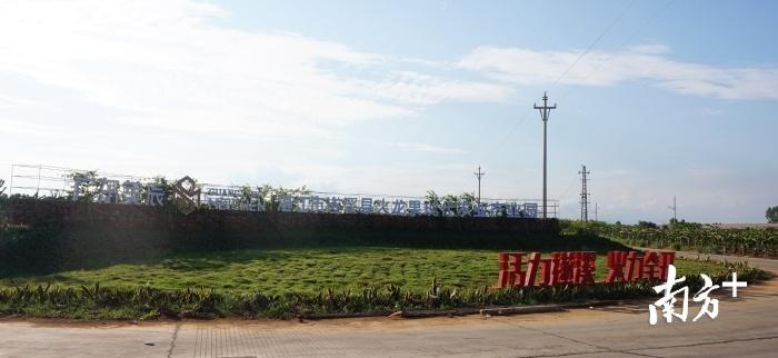 遂溪火龙果现代农业产业园。吴文静 摄