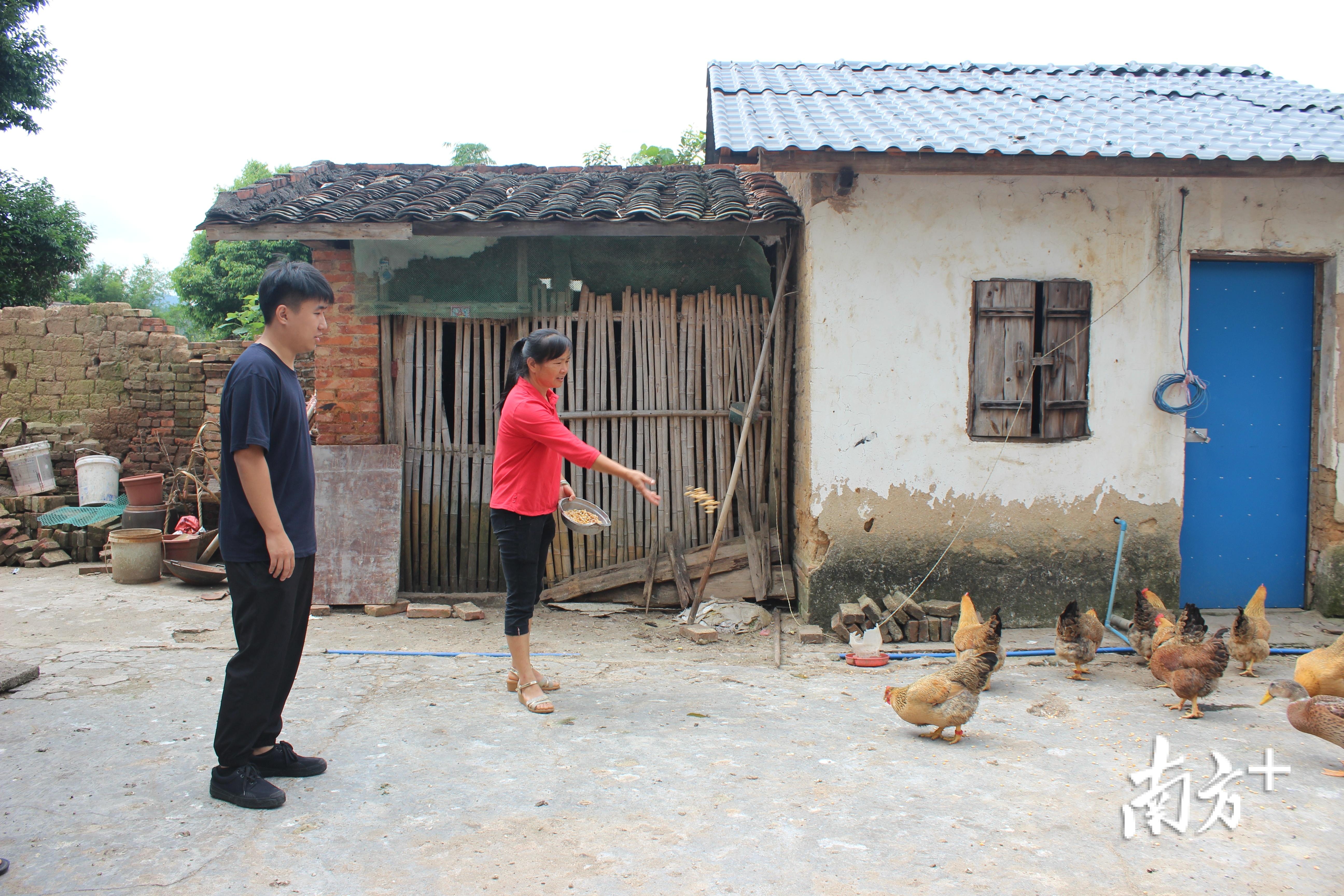 罗文珍家里养的鸡。