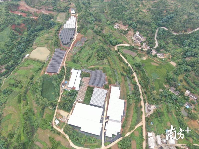 郁南县东坝镇华创花卉种植扶贫基地。受访者供图