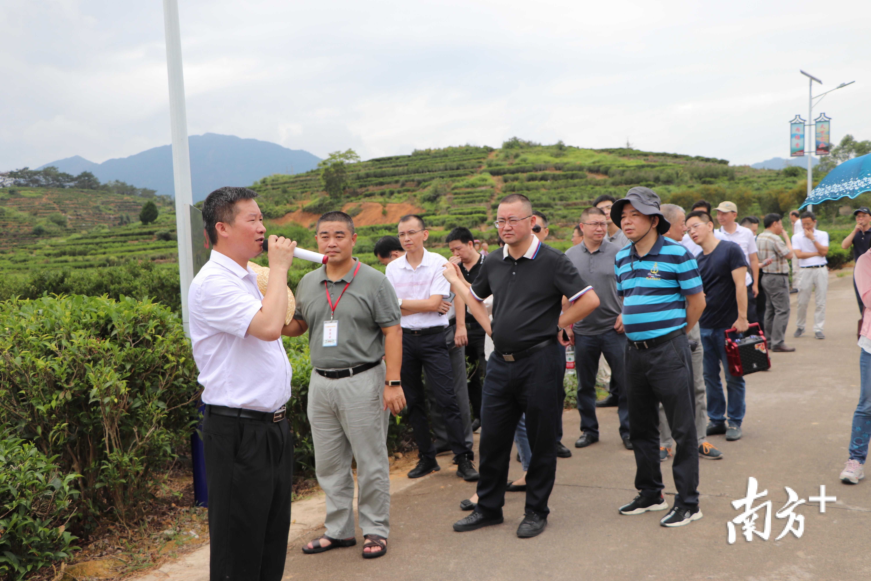 凤凰单丛茶省级现代农业产业园现场教学。
