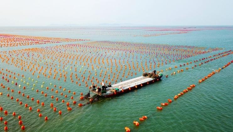 视觉丨南澳:彩练海上舞,绿水入画来