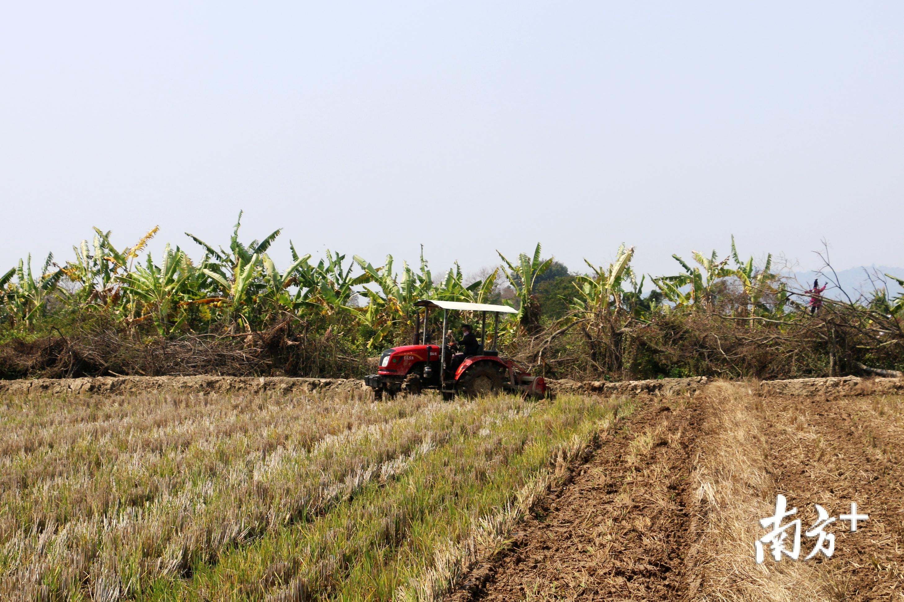 """昔日的耕牛已被""""铁牛""""所代替,我国很多地区实现了拖拉机耕地。张伟炜 摄"""