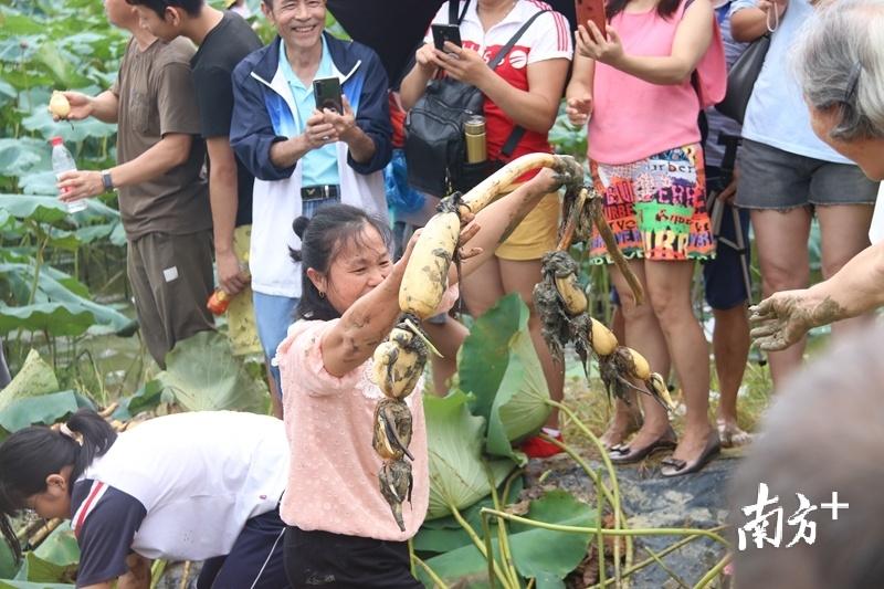 游客将莲藕递给同伴。陈咏怀 摄