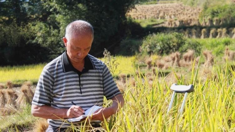 视频 | 扎根山区30年,他在贵州高原种出高产稻