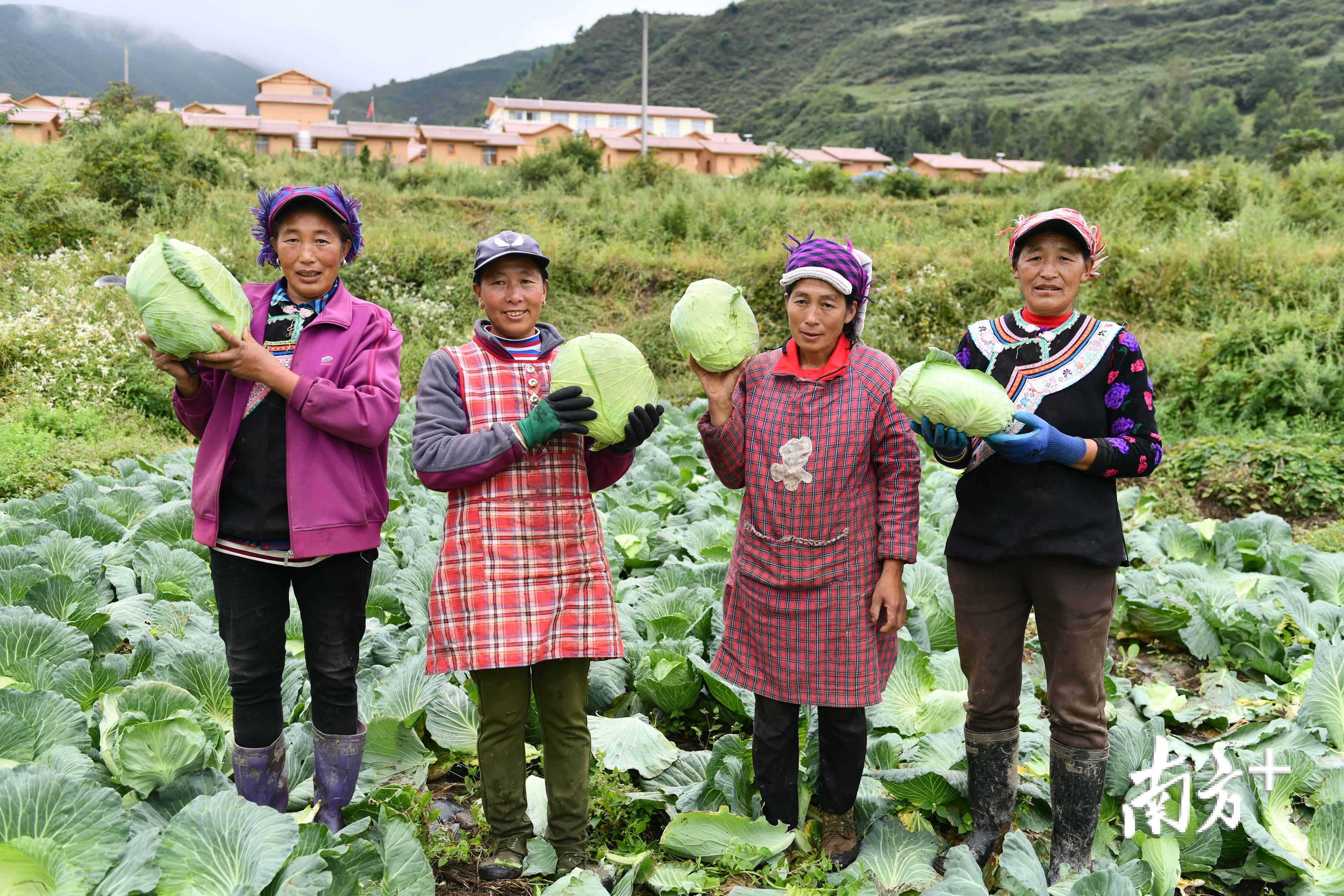 甘洛县蓼坪乡清水村,村民高兴地展示种植收割的有机蔬菜。