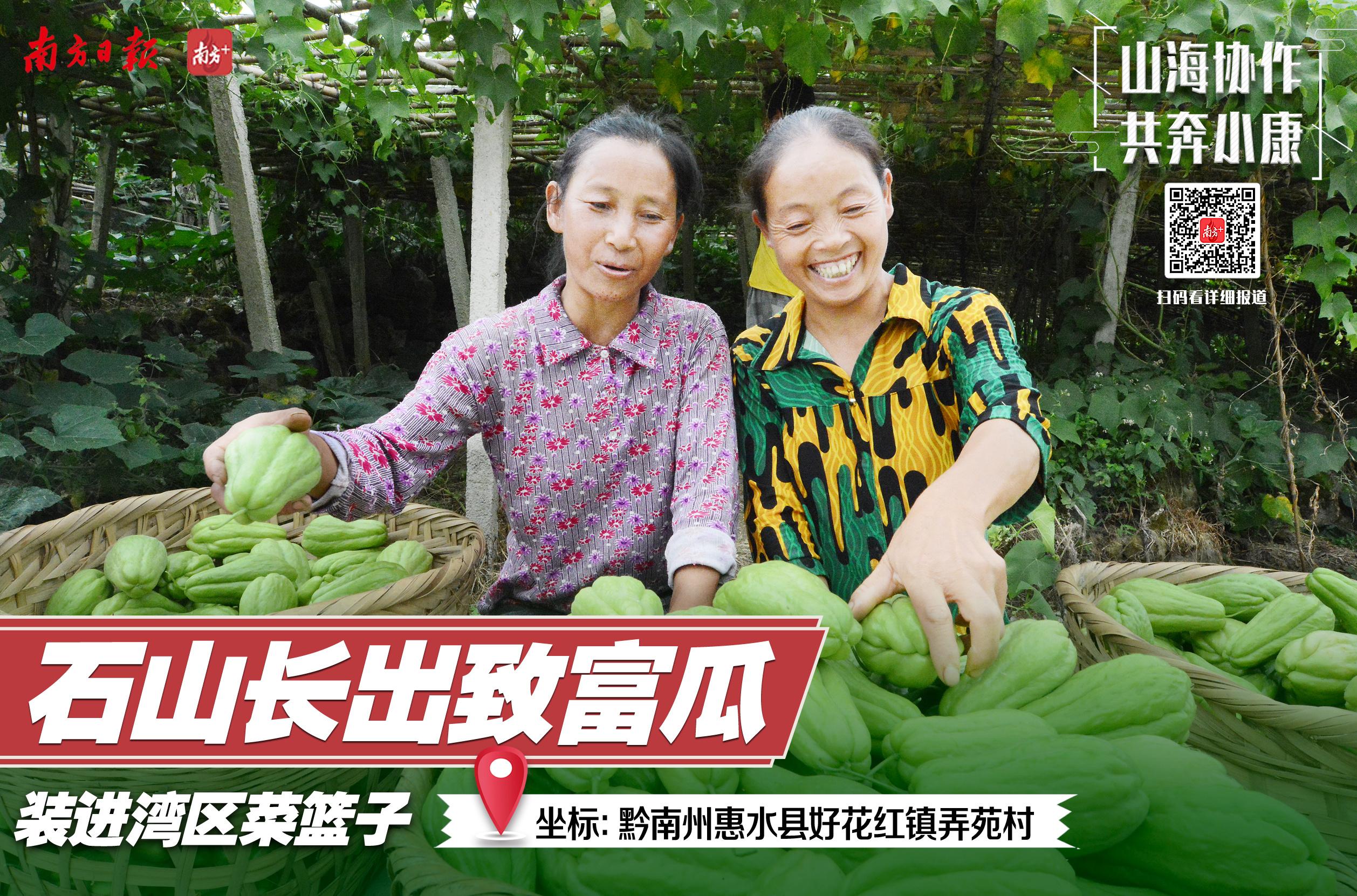 """广州&黔南:""""佛手""""摘下贫困帽——来自广州的资金注入这片田地,石头山上长出了能够丰收的""""脱贫瓜""""。"""