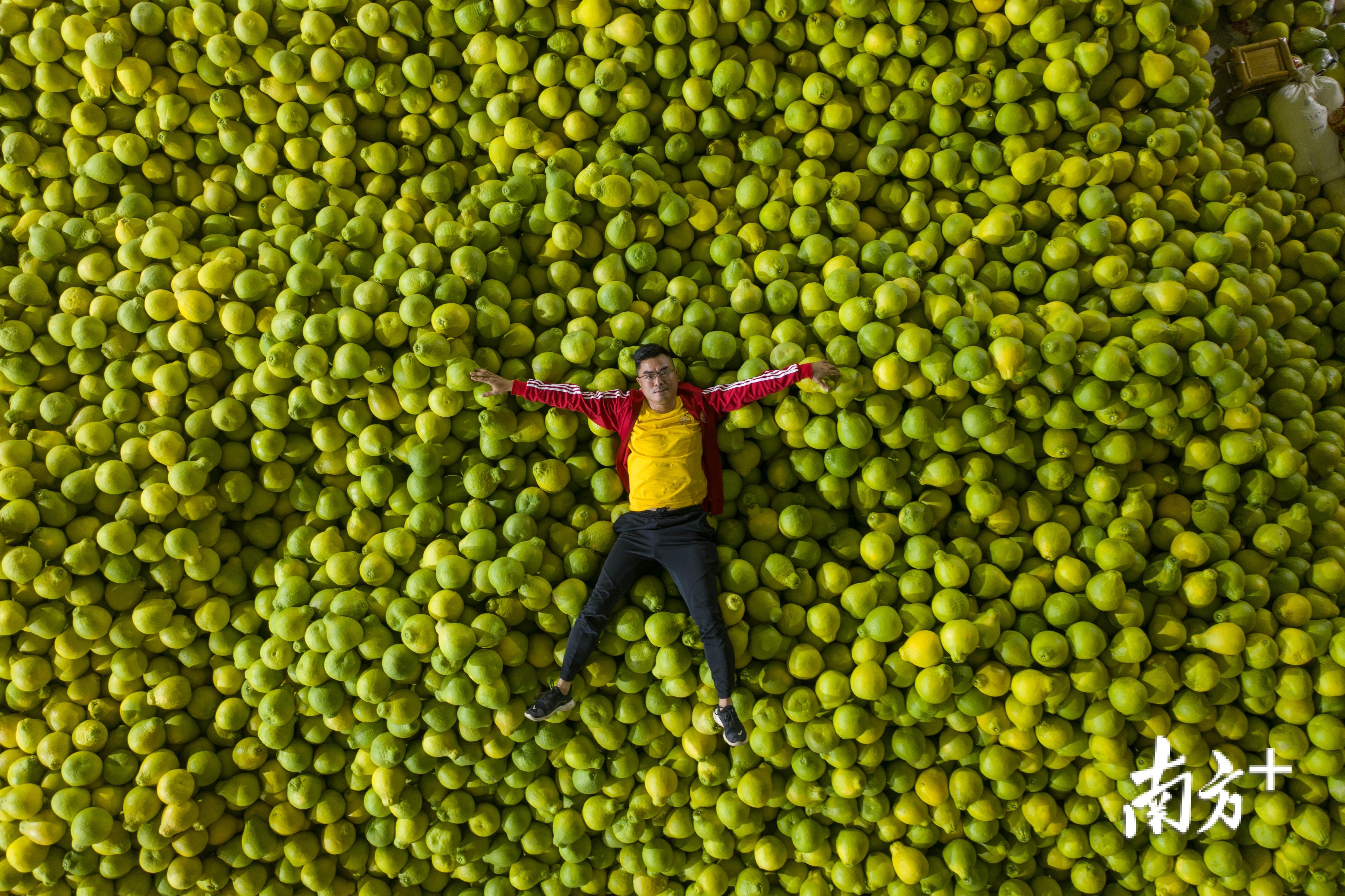 """大黄村金柚产业园区加工车间新鲜采摘的柚果堆成一座座""""小山"""""""