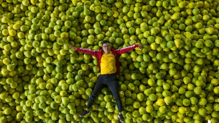 柚子熟了,果农笑了