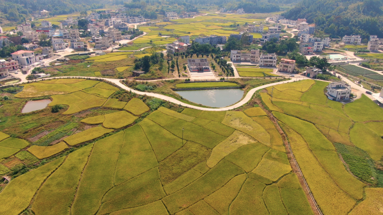 河源市紫金县:干群携手共进,实现乡村振兴