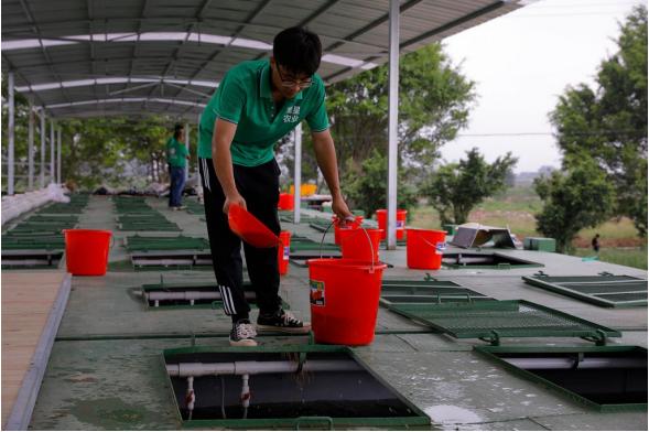 观星(肇庆)农业科技有限公司数字化渔业养殖基地位于鼎湖沙浦镇,2020年11月底,项目一期已出鱼,苗成活率高达98%,产值超过400万。