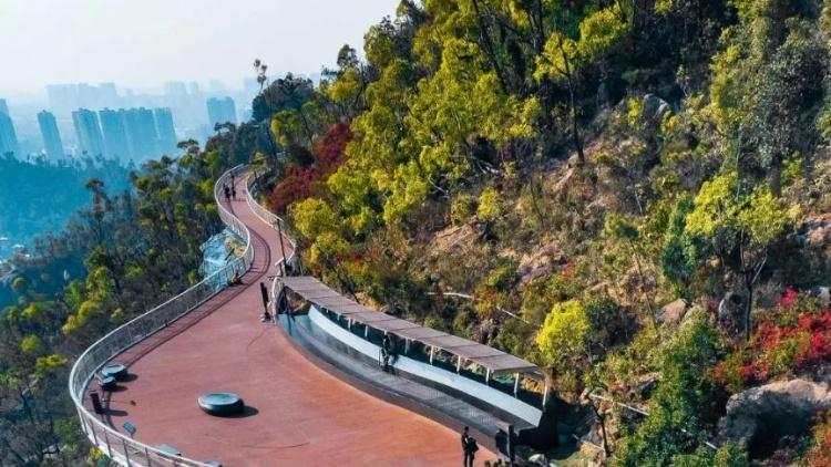 来了!板樟山山地步道预计月底开放