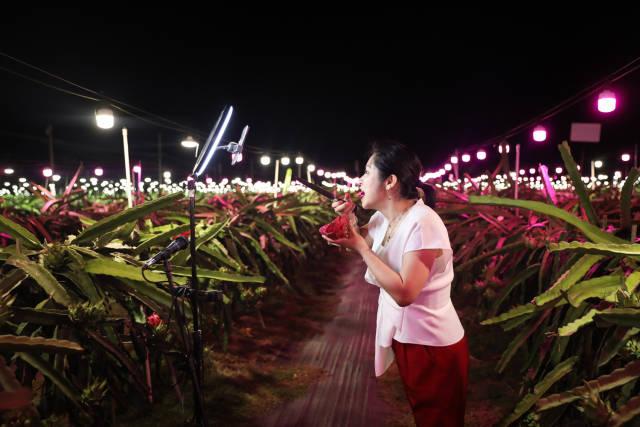 """一位带货""""网红""""站在田间,向观众介绍湛江遂溪县大家村的火龙果。南方日报记者 罗斌豪 摄"""