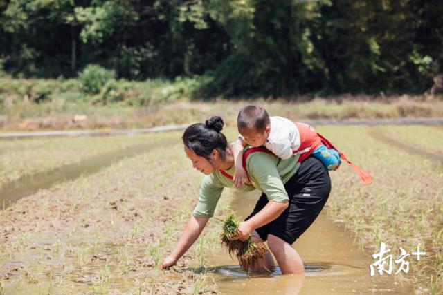 邓丽妃带着孩子在地里耕作。陈腾熙 摄