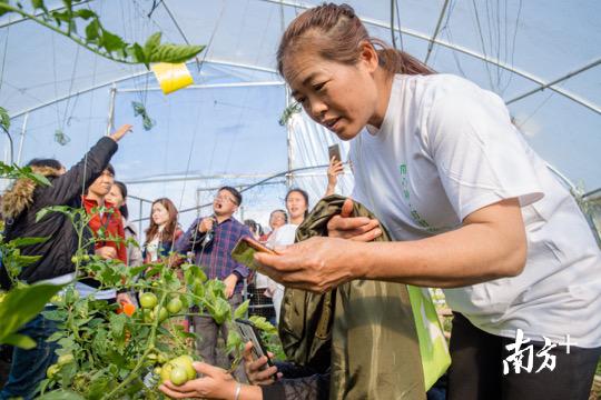 乡村妇女们参加生态农业技能培训。陈腾熙 摄