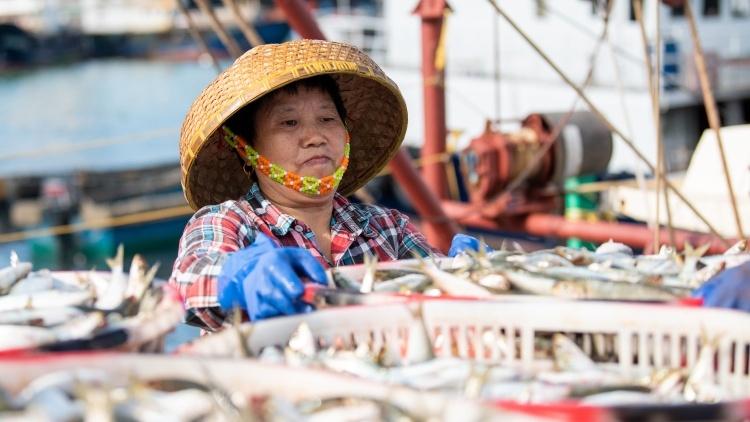 尝鲜啦!开渔后渔船陆续回港满载而归