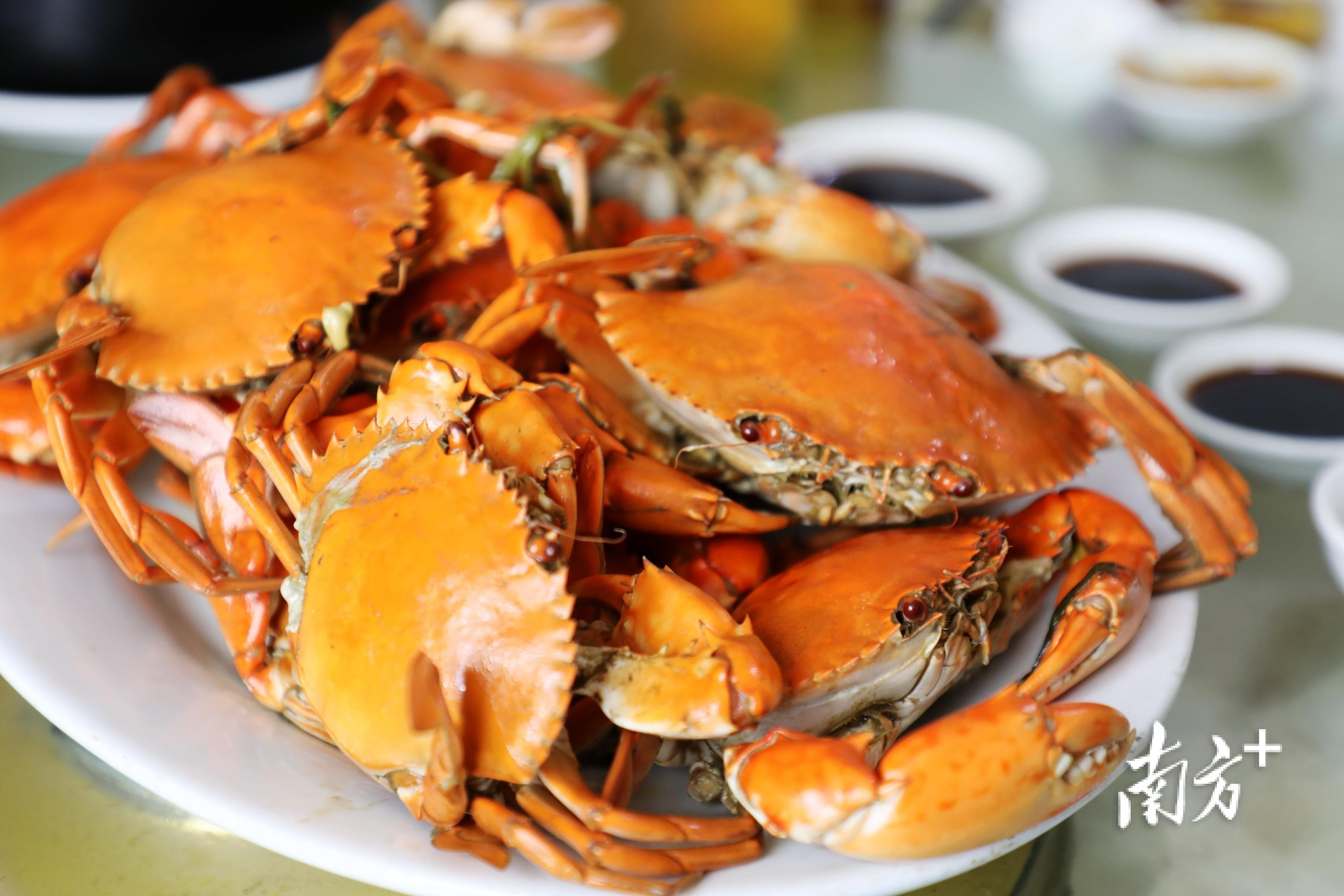 牛田洋青蟹学名叫拟穴青蟹,以个大、肉甜、味甘、膏香著称。  南方+ 张伟炜 拍摄