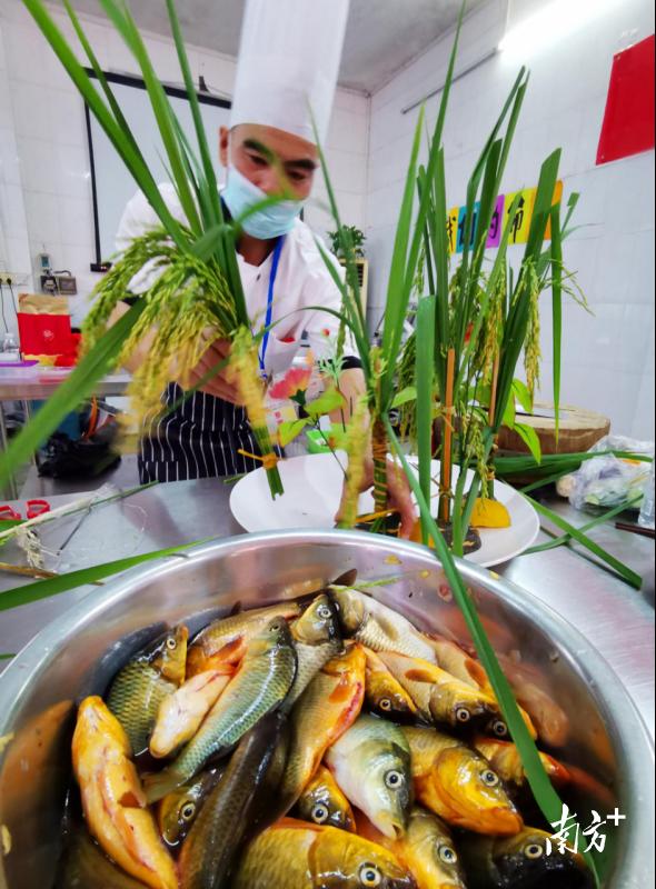 除了比拼厨艺,厨师们在菜品造型上也颇用心思。一位厨师用稻谷作为菜品的点缀。黄津 摄