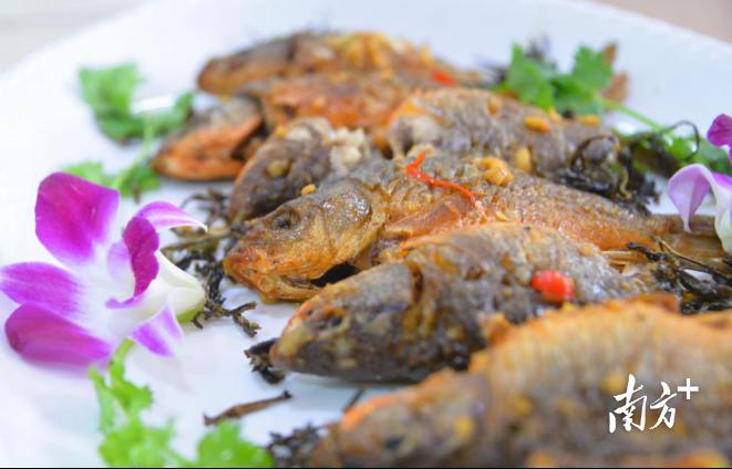 煎至金黄的稻田鱼,让人食指大动。黄津 摄