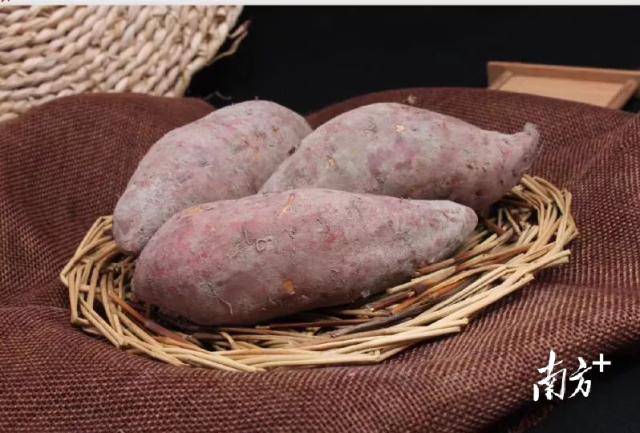五华高山番薯