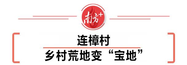 """连樟村▶▷乡村荒地变""""宝地"""""""