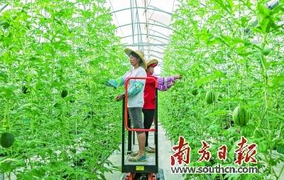 """连樟村建起了现代农业科技示范园,村民实现在""""家门口""""就业。吴明 摄"""
